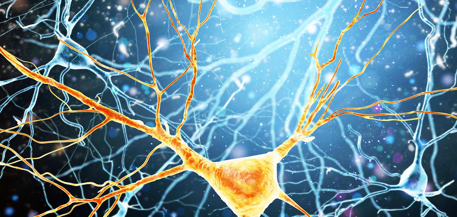 Human Brain Neurons